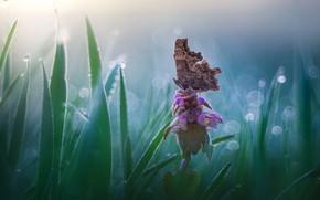 Картинка цветок, трава, природа, бабочка, боке, Roberto Aldrovandi
