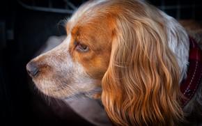 Картинка собака, мордочка, профиль