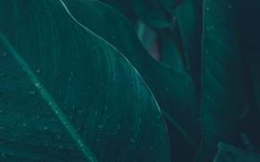 Картинка природа, лист, растение