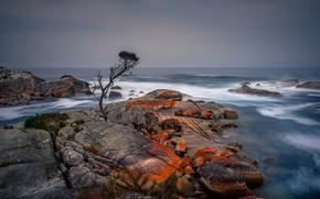 Картинка море, дерево, берег, Tasmania, Binalong Bay