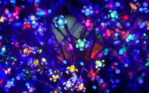 Картинка цветы, неон, гирлянда, лампочки