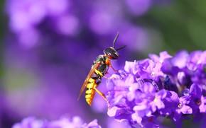 Картинка цветы, фон, оса, насекомое