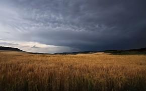 Картинка пшеница, поле, небо, природа, колосья