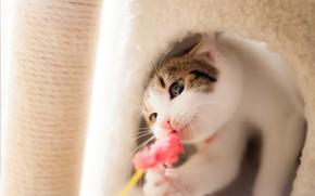 Картинка кошка, глаза, кот, взгляд, морда, игрушка, игра, ворс, нора, мех, светлый фон, когтеточка, кошкин дом, …
