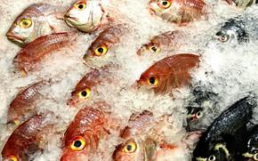 Картинка еда, лёд, рыба