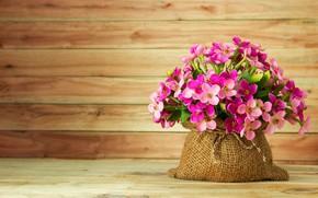 Картинка цветы, summer, розовые, pink, flowers