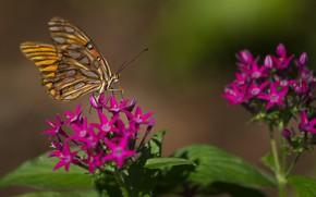 Картинка бабочка, сад, цветки, flowers