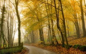 Картинка дорога, осень, лес, фото
