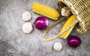 Картинка осень, кукуруза, лук, плоды, чеснок
