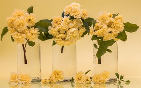 Картинка фон, розы, банки, жёлтые