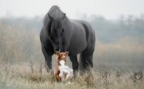 Картинка трава, лошадь, собака, друзья, Светлана Писарева