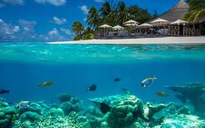 Картинка море, рыбы, пейзаж, природа, тропики, пальмы, океан, дно, кораллы, зонтики, Мальдивы, Markus Stauffer