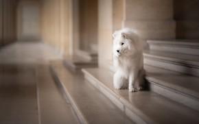 Картинка друг, собака, ступени