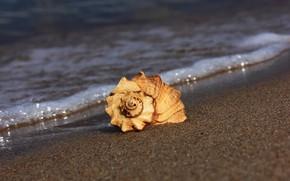 Картинка песок, пляж, ракушка
