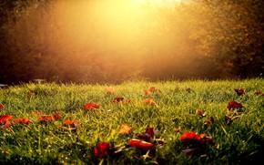 Картинка осень, трава, листья, свет, природа, роса, парк, поляна, листва, листок, солнечно, кусты, боке, осенние листья, …