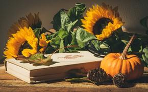 Картинка листья, свет, подсолнухи, цветы, желтые, очки, тыква, книга, натюрморт, шишки