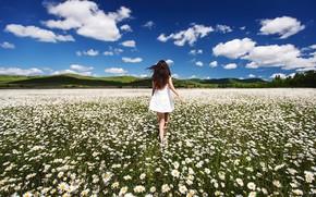Картинка поле, лето, небо, девушка, ветер, холмы, спина, ромашки, Sergey Shatskov