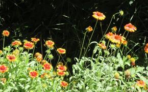 Картинка цветы, фон, солнечно, Mamala ©, лето 2018