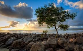 Картинка sky, Tree, sea, landscape, nature, clouds, sunrise, stones, sunlight