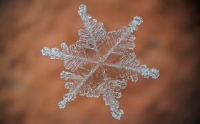Картинка макро, фон, снежинка