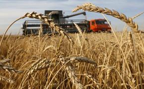 Картинка пшеница, поле, комбайн, уборка урожая, village of Solgon, combine harvester