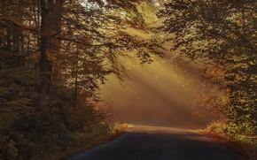 Картинка дорога, осень, лес, свет, ветки, туман, парк, листва, шоссе