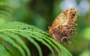 Картинка листья, макро, фон, узор, бабочка, крылья, насекомое, папоротник, коричневая, боке, бежевая