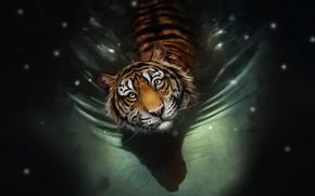 Картинка Вода, Рисунок, Взгляд, Кошка, Тигр, Морда, Art, Tiger, Water, Cat, Полосатый, by Bianka Faragó, Bianka ...
