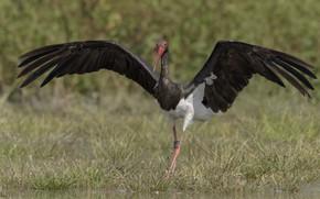 Картинка природа, птица, крылья, браслет, шагает, DUELL ©