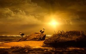 Картинка море, небо, солнце, облака, свет, пейзаж, закат, птицы, природа, камни, рендеринг, берег, две, чайки, пара, …