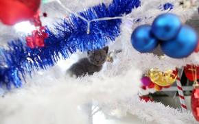 Картинка кошка, взгляд, шарики, украшения, котенок, серый, праздник, игрушки, новый год, рождество, малыш, мордочка, котёнок, гирлянда, …