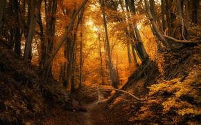 Картинка осень, лес, деревья, Польша, тропинка, Łukasz Sieku