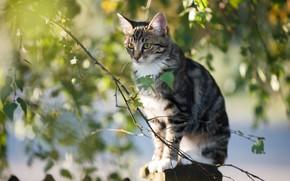 Картинка листья, свет, ветки, котенок, сидит, березовые