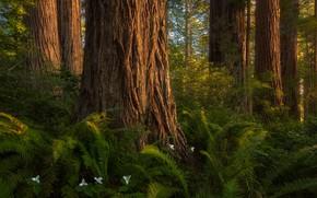 Картинка лес, дерево, папоротники