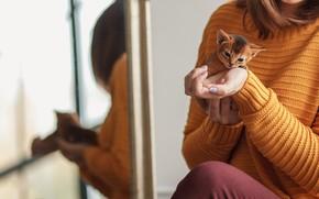 Картинка девушка, котенок, руки, малыш