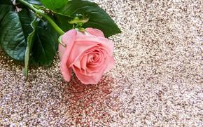 Картинка стол, розовая, роза