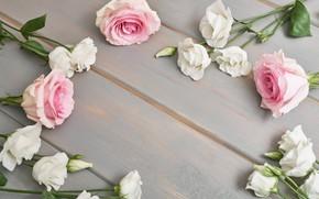 Картинка фон, розы, эустомы