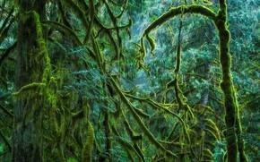 Картинка лес, мох, Канада, Британская Колумбия, остров Ванкувер, Cathedral Grove, Провинциальный парк Макмиллана