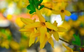Картинка Весна, Yellow flowers, Жёлтые цветочки