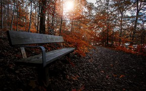 Картинка природа, парк, скамья