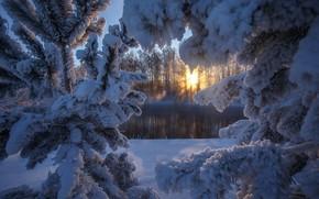 Картинка зима, солнце, снег, река, елка, Алтай