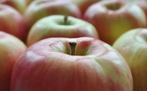 Картинка макро, яблоки, фрукты