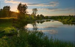 Картинка лето, солнце, деревья, река, Андрей Шумилин