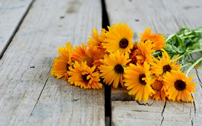 Картинка цветы, букет, герберы, wood, flowers, orange, gerbera
