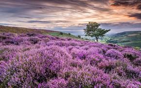 Картинка поле, лето, цветы, дерево