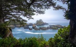 Картинка деревья, скалы, побережье