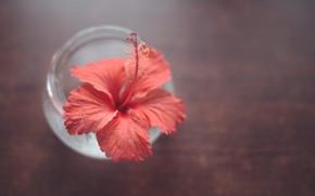 Картинка цветок, фон, банка