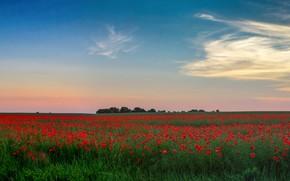 Картинка зелень, поле, лето, небо, облака, деревья, цветы, синева, голубое, маки, даль, горизонт, простор, красные, маковое …
