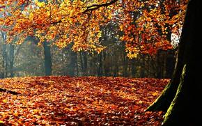Картинка осень, листья, солнце, деревья, пейзаж, парк