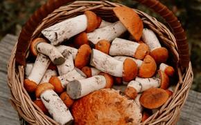 Картинка грибы, гриб, урожай, корзинка, много, симпатичные, подосиновики, крепкие, находка грибника